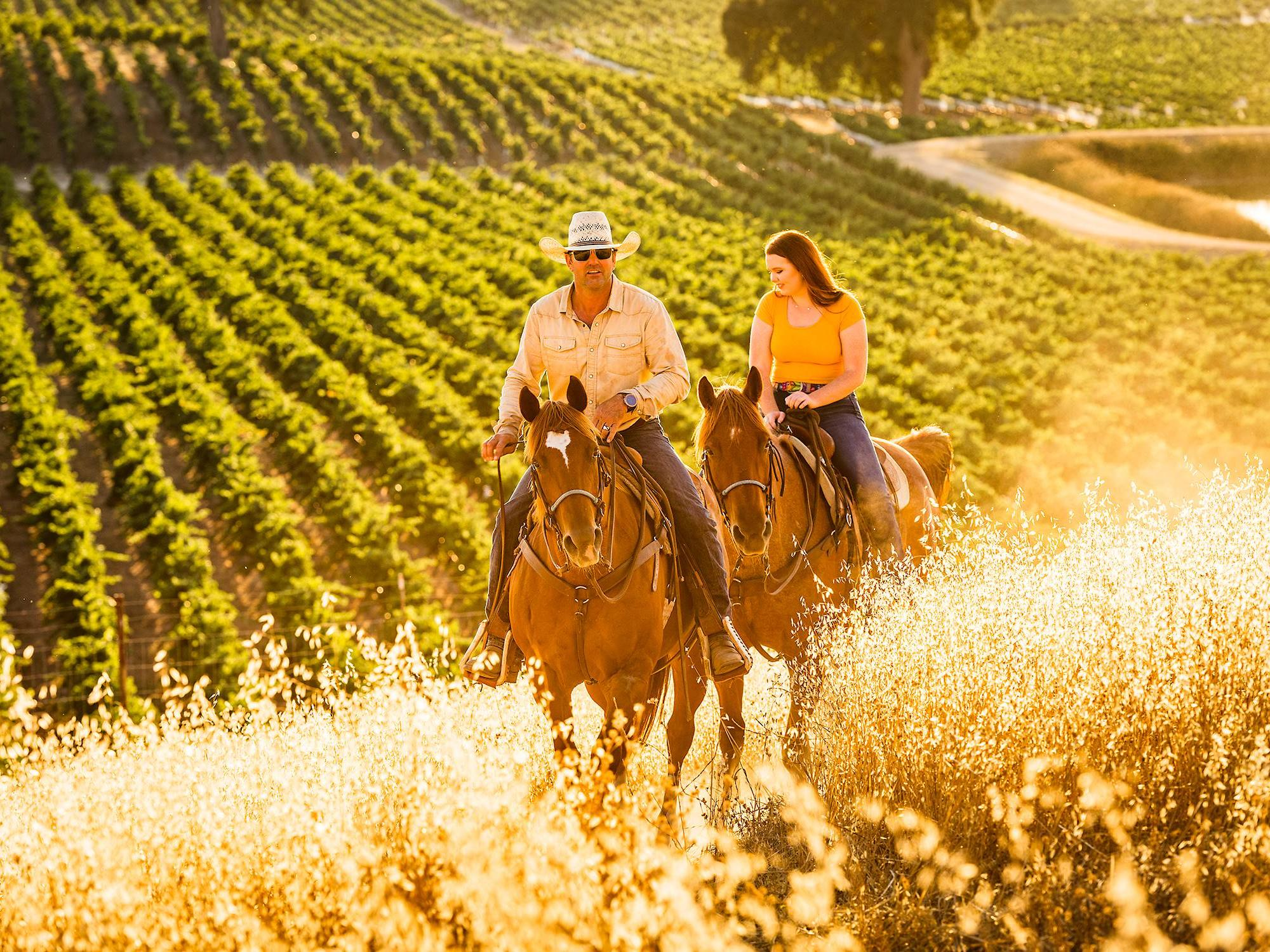 Horseback Riding through Cass Vineyard