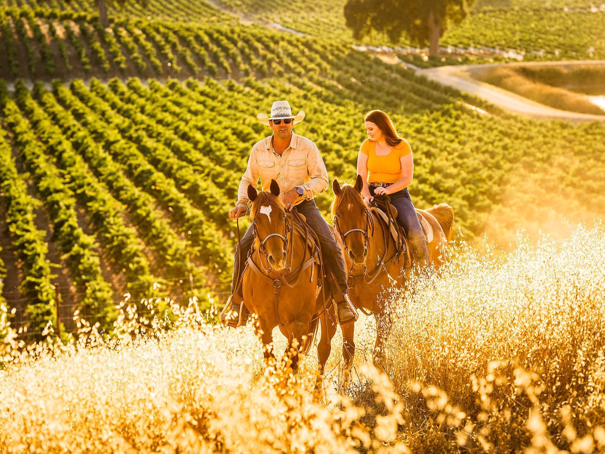 Horseback Riding through Cass Vineyard