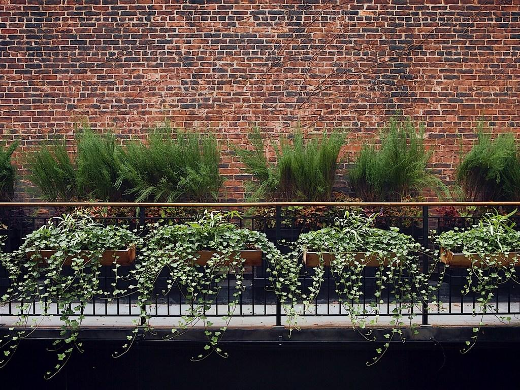 Greenery growing in front of brick wall