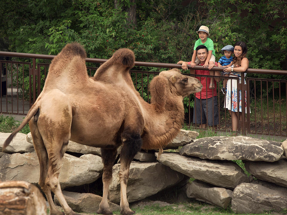 family looking at camel
