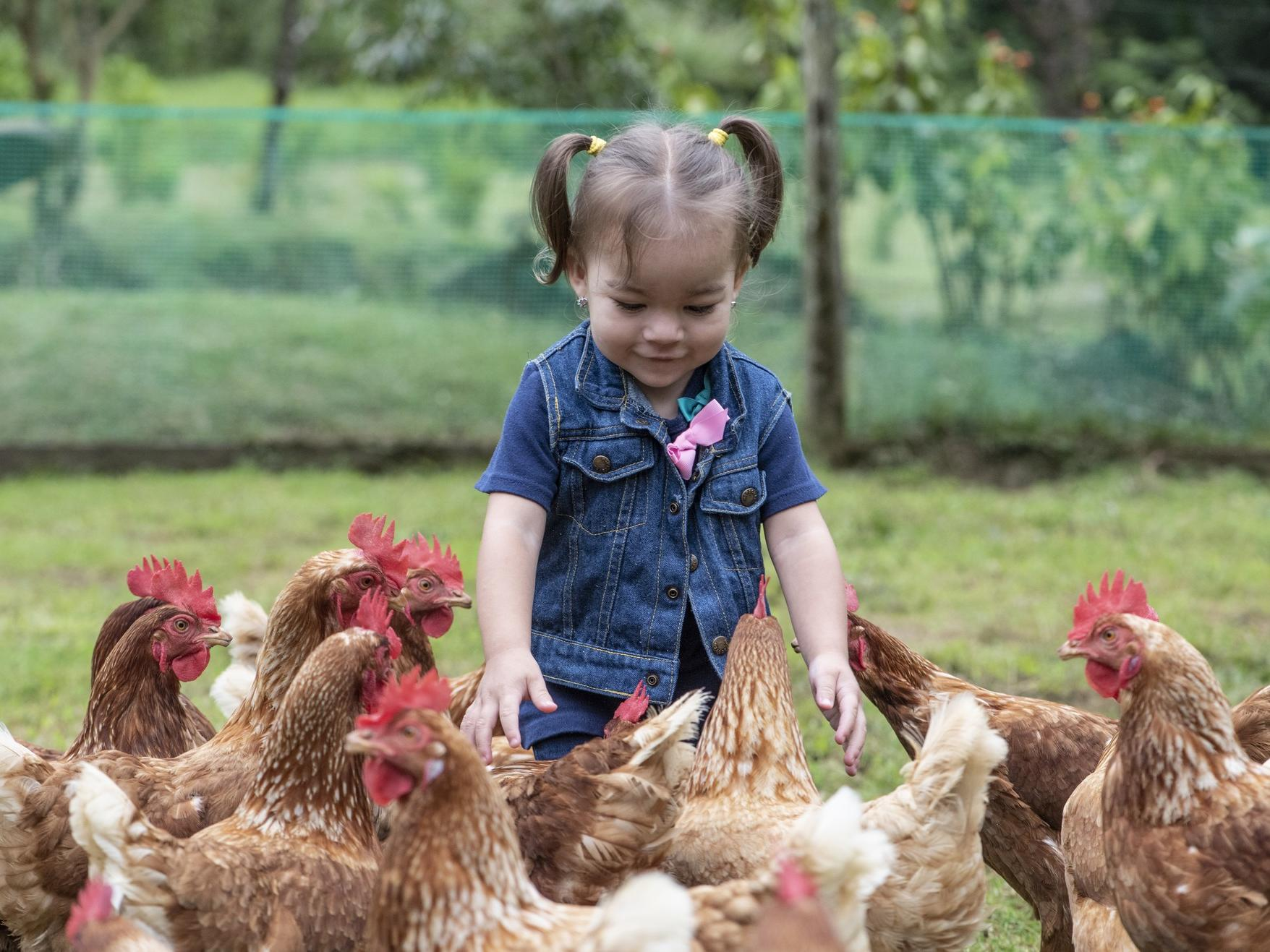 child petting chickens