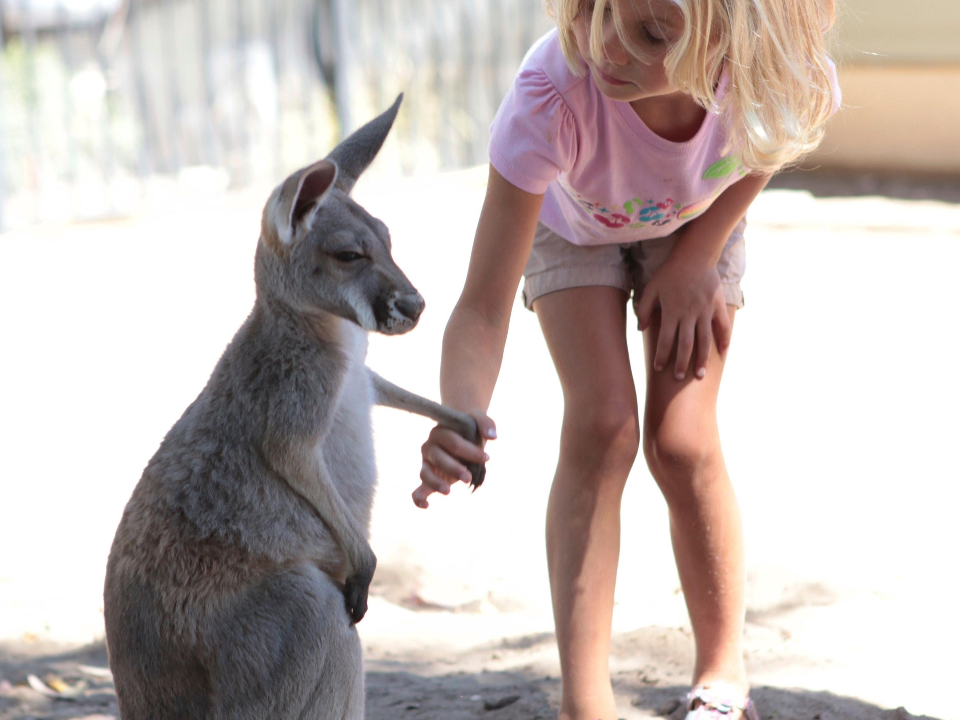 Child with Kangaroo