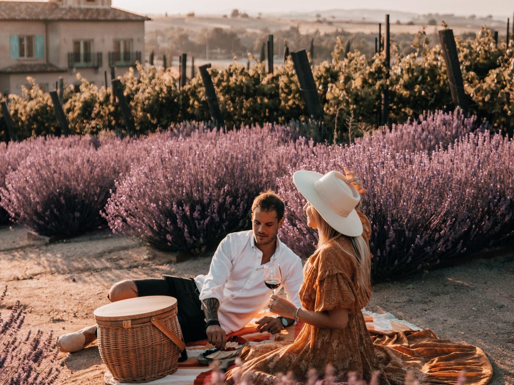 Couple having picnic in lavender field