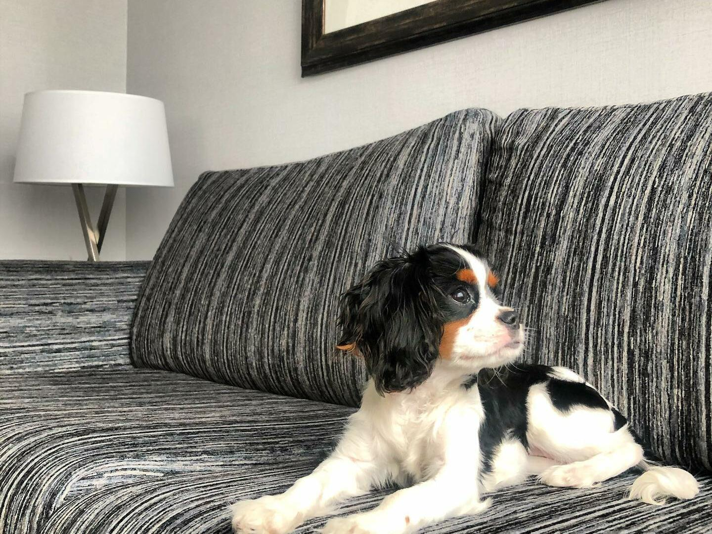 Pets Stay Free - Downtown Vancouver Hotel