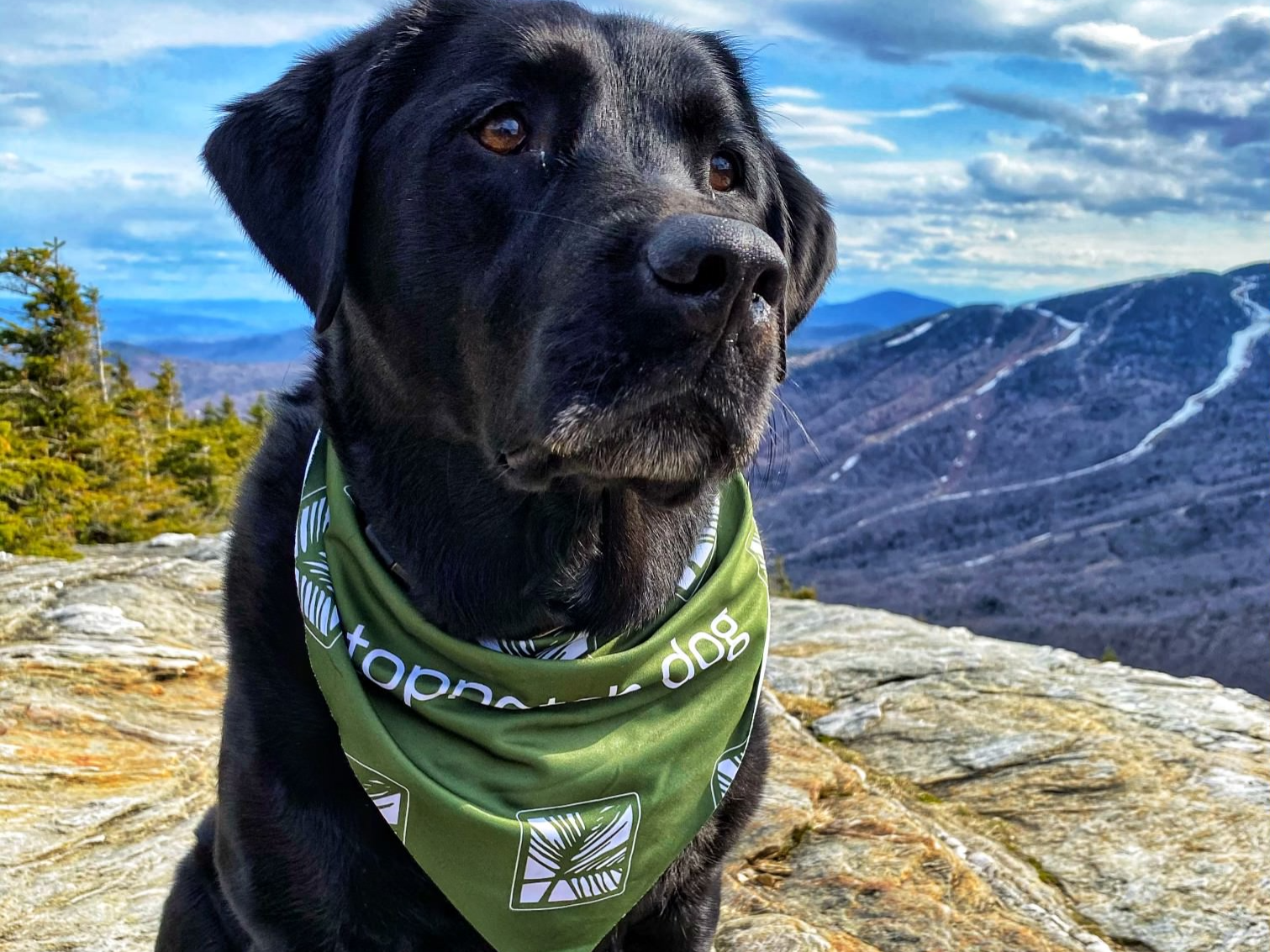 A dog on top of the mountain at Topnotch Stowe Resort