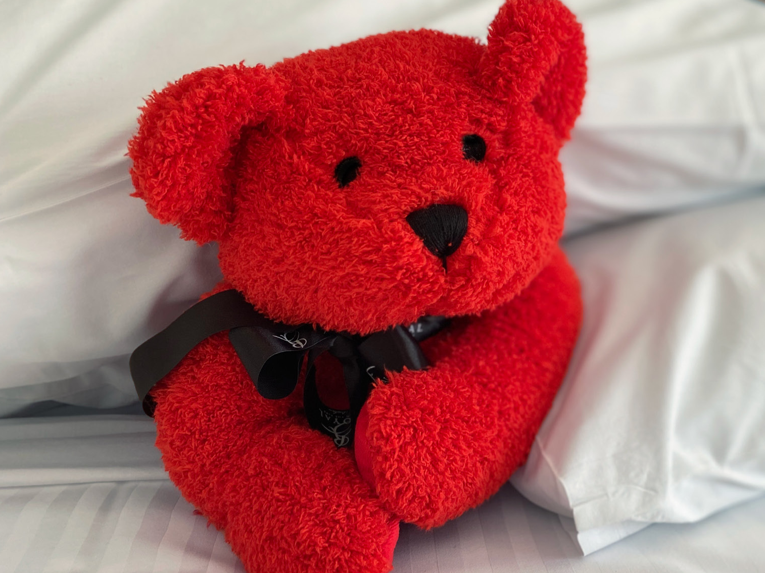 Lovely red teddy bear at Royal on the Park Hotel