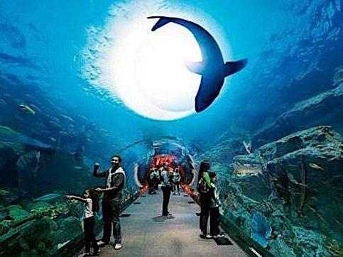 Dubai Aquarium and Underwater Zoo Shark