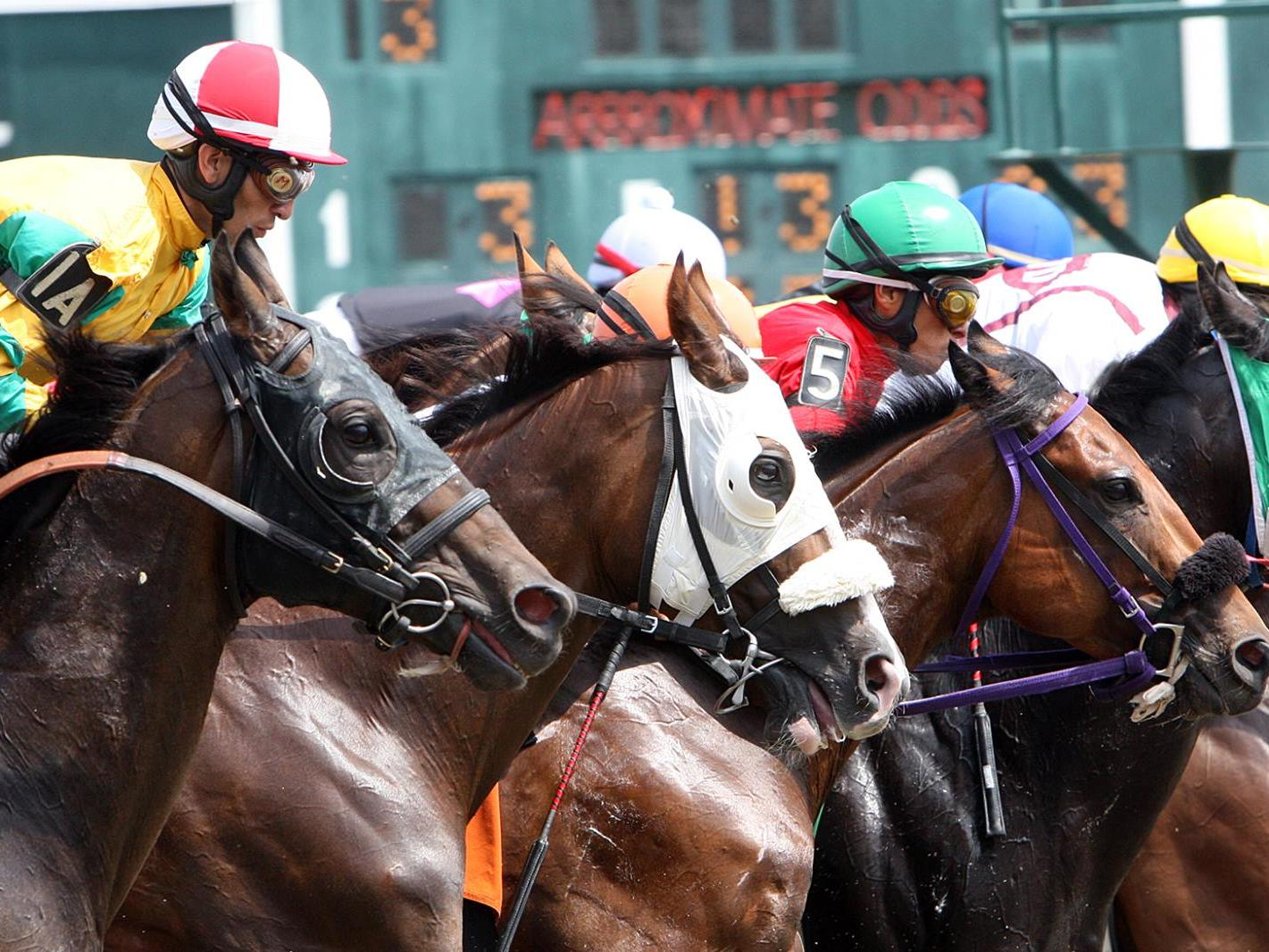 Race horses at Suffolk Downs