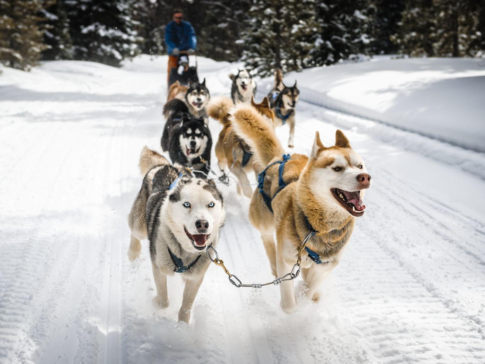 Huskies leading a dogsled at high speeds.