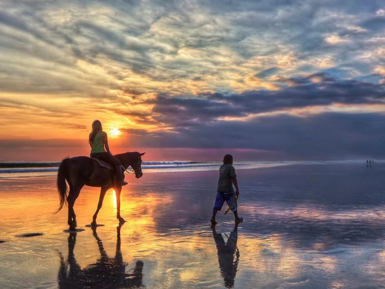 Bali Island Horse