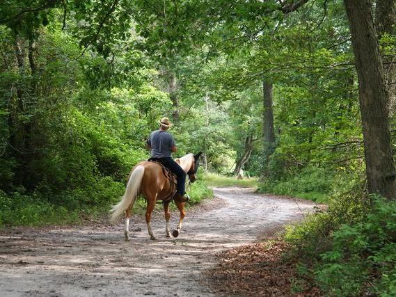 man riding a horse down dirt path