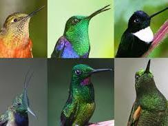 Mosaic of hummingbirds