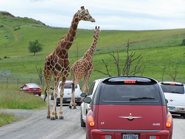Winston OR Wildlife Safari