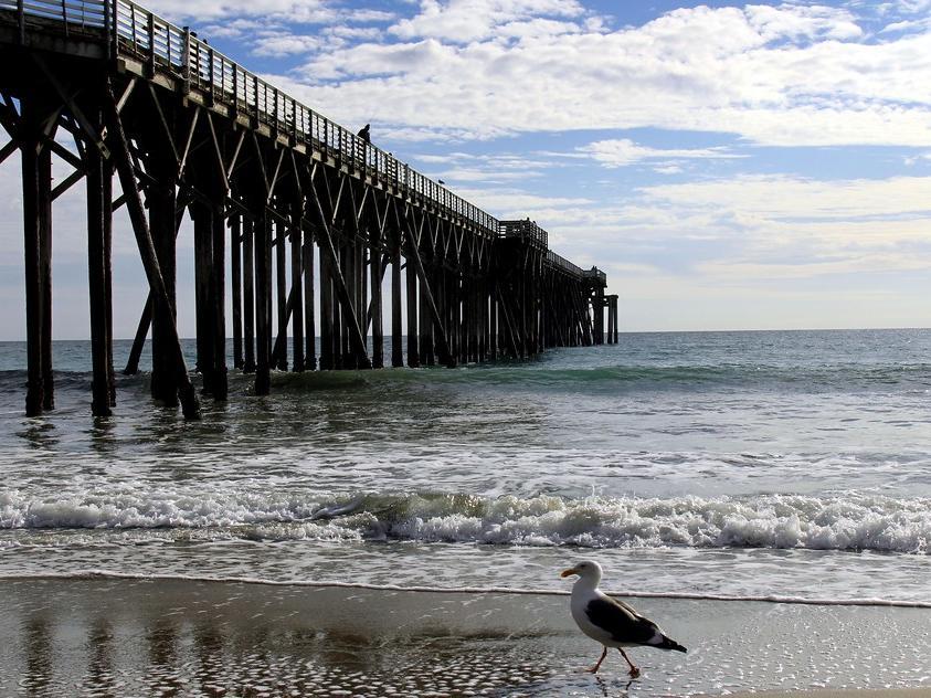 Seagull near beach peir