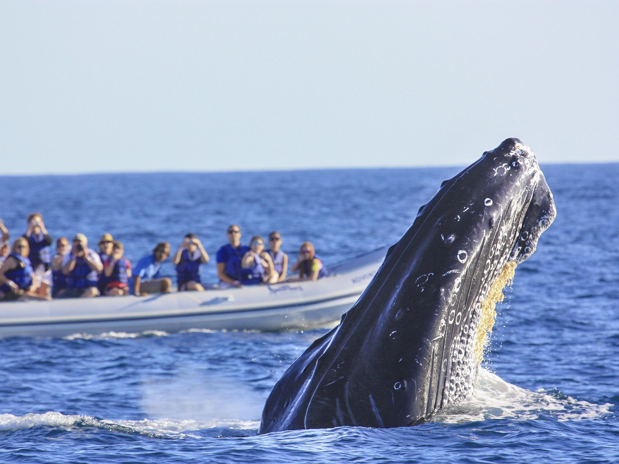 a group of people watching a whale