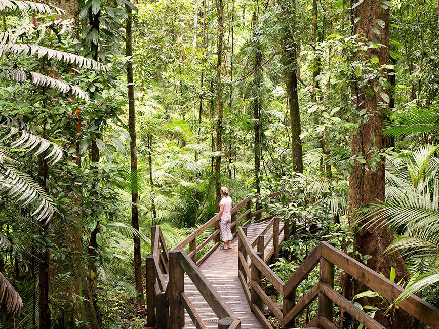 Daintree Forest near Silkari Hotel Port Douglas