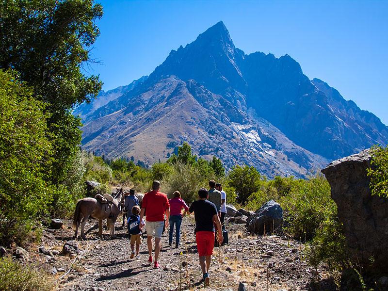 Trekking Bosque de los Cipreses near NOI Puma Lodge Hotel
