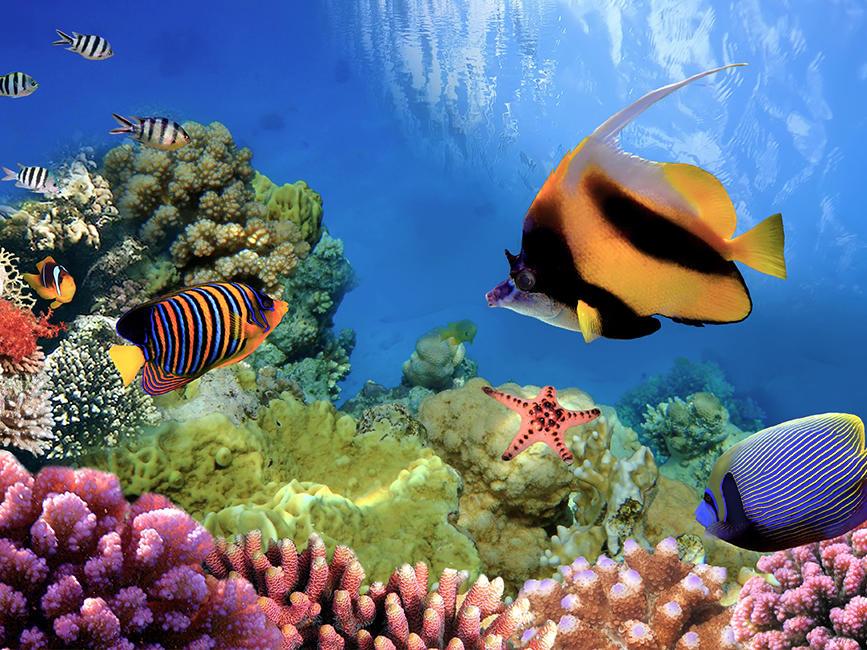 Coral Reef near Silkari Hotel Port Douglas