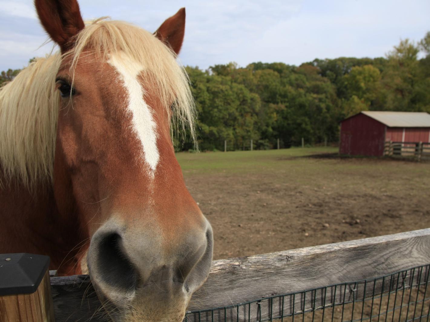 Oxon Hill Farm Horse