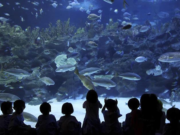 Back-view of visitors looking at a large aquarium of marine animals
