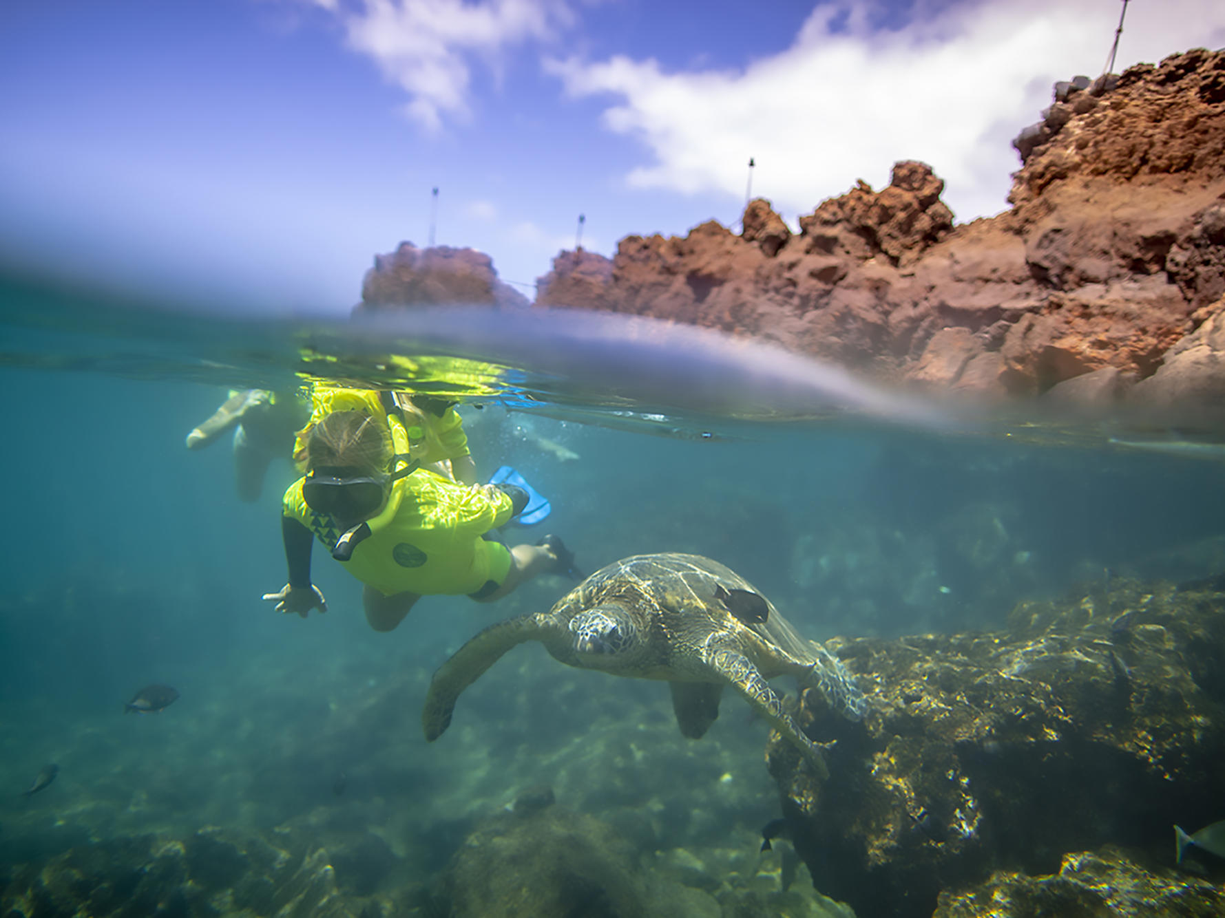 kid snorkeling next to sea turtle