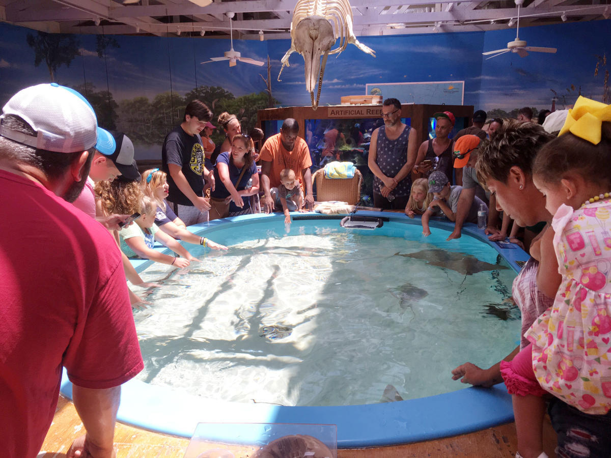 Crowd looking at stingrays.