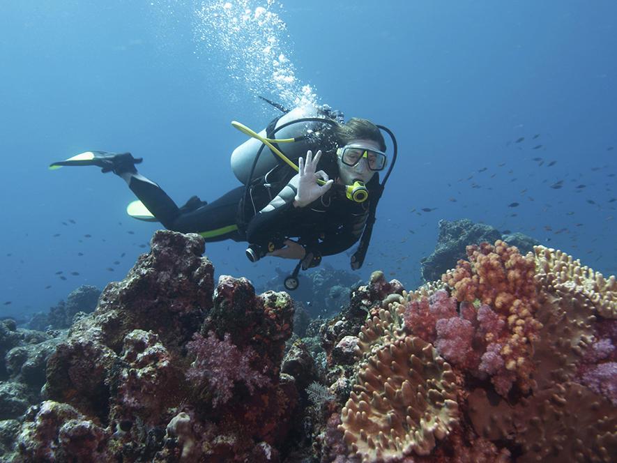 person scuba diving near coral