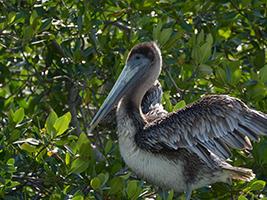 pelican near tree