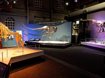 Newcastle Museum