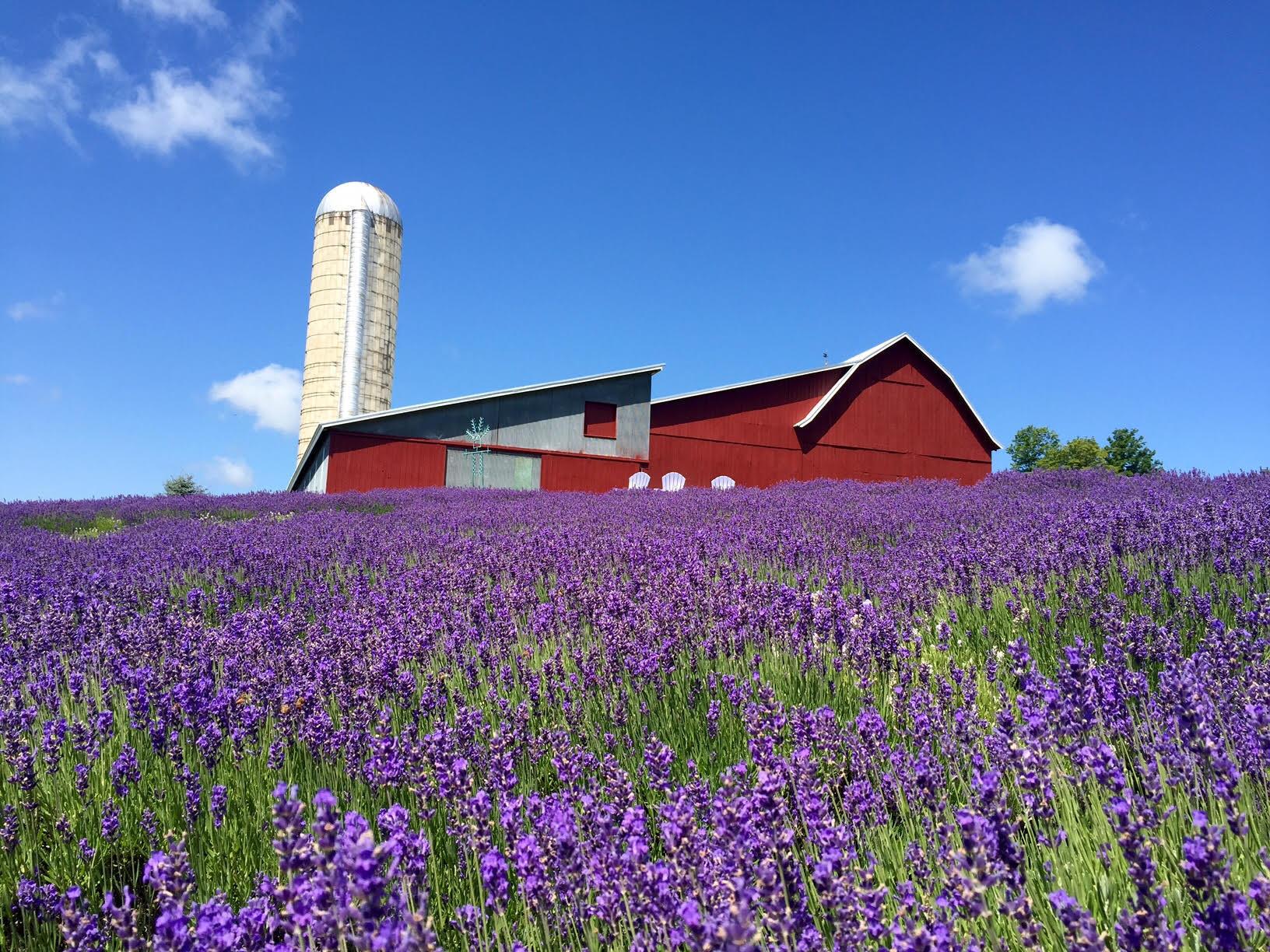 Lavendar Hill Farm