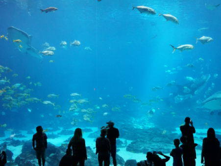 People at an Aquarium near the hotel