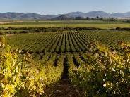 Mass field view of Ventisquero Vineyard at NOI Blend Colchagua