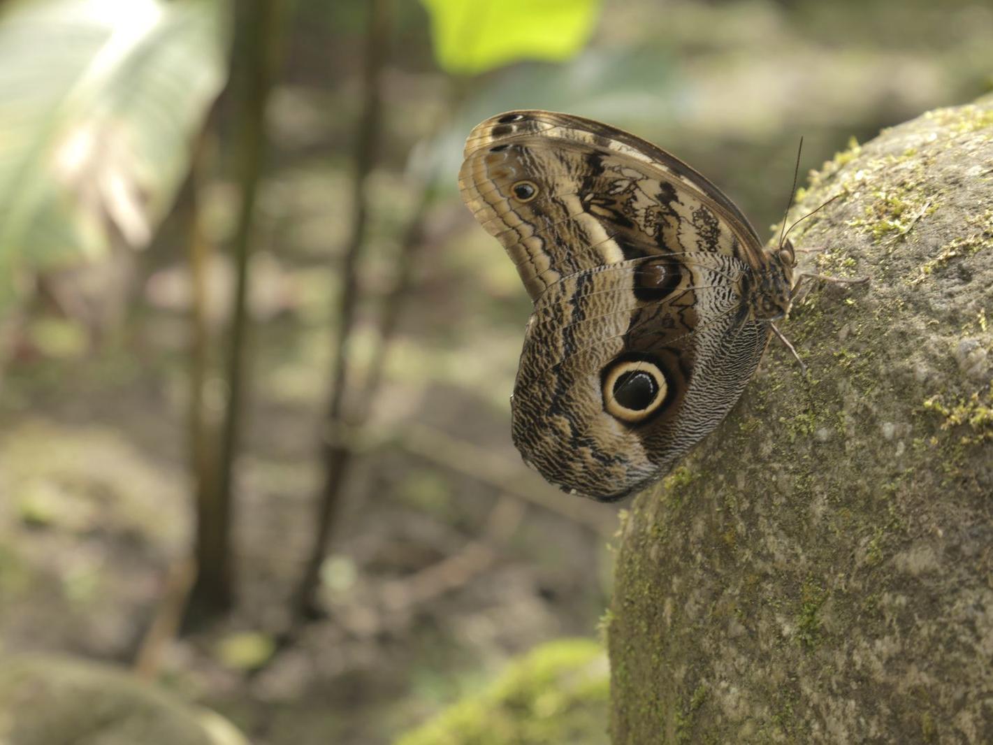 Capture of butterfly in Mariposarium  near Hotel Sumaq