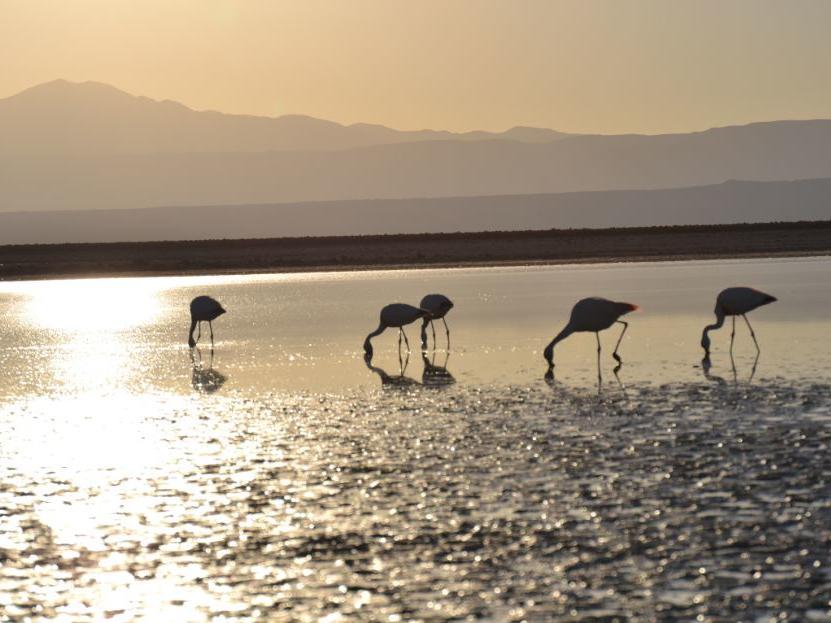flamingo in Chaxa Lagoon & Toconao near NOI Casa Atacama hotel