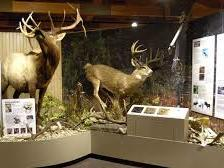 deer exhibit with statues and details on plaques