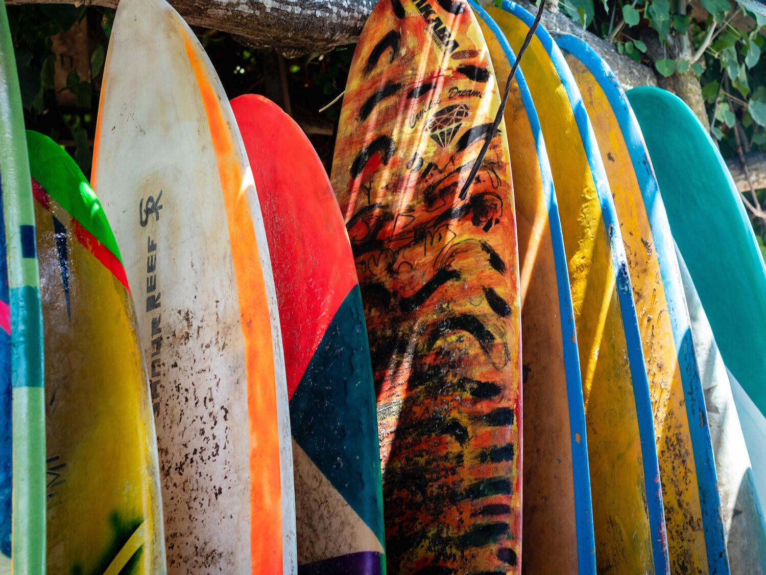 surfboards lined up
