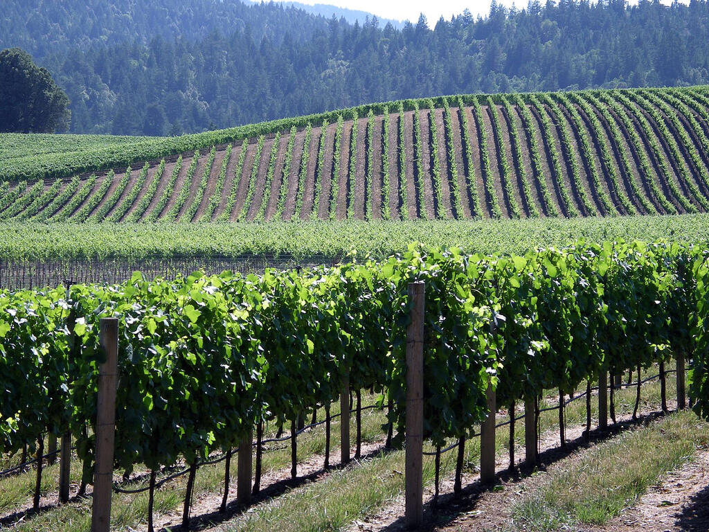 Landscape of grapes in wine valley near Heritage House Resort