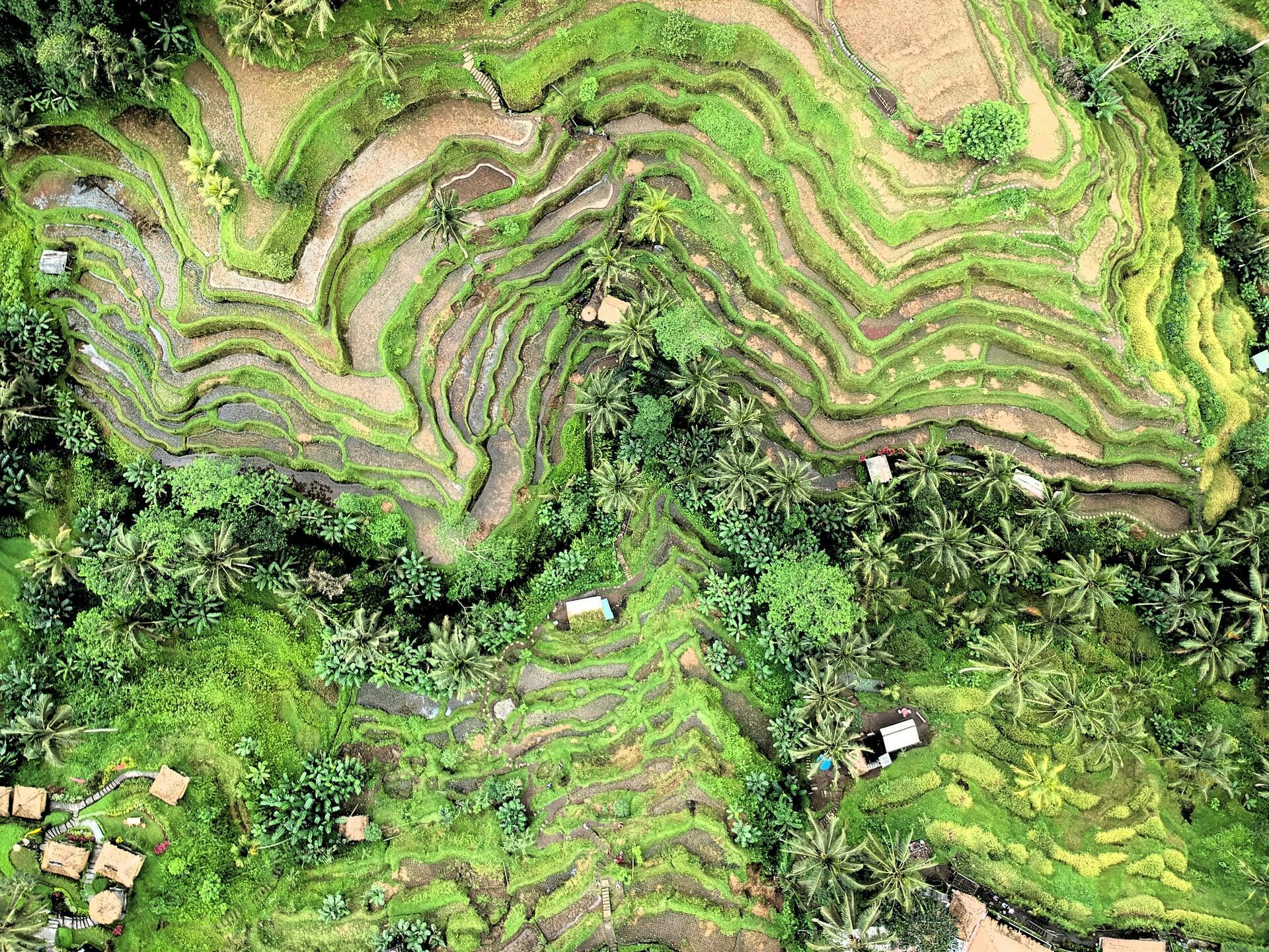 View of Ubud near Peppers Seminyak
