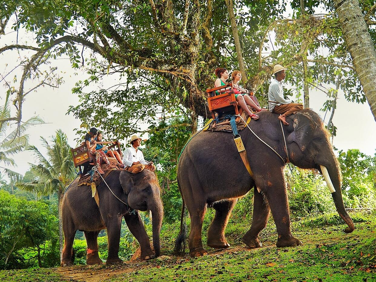 Picture of elephant ride near Peppers Seminyak