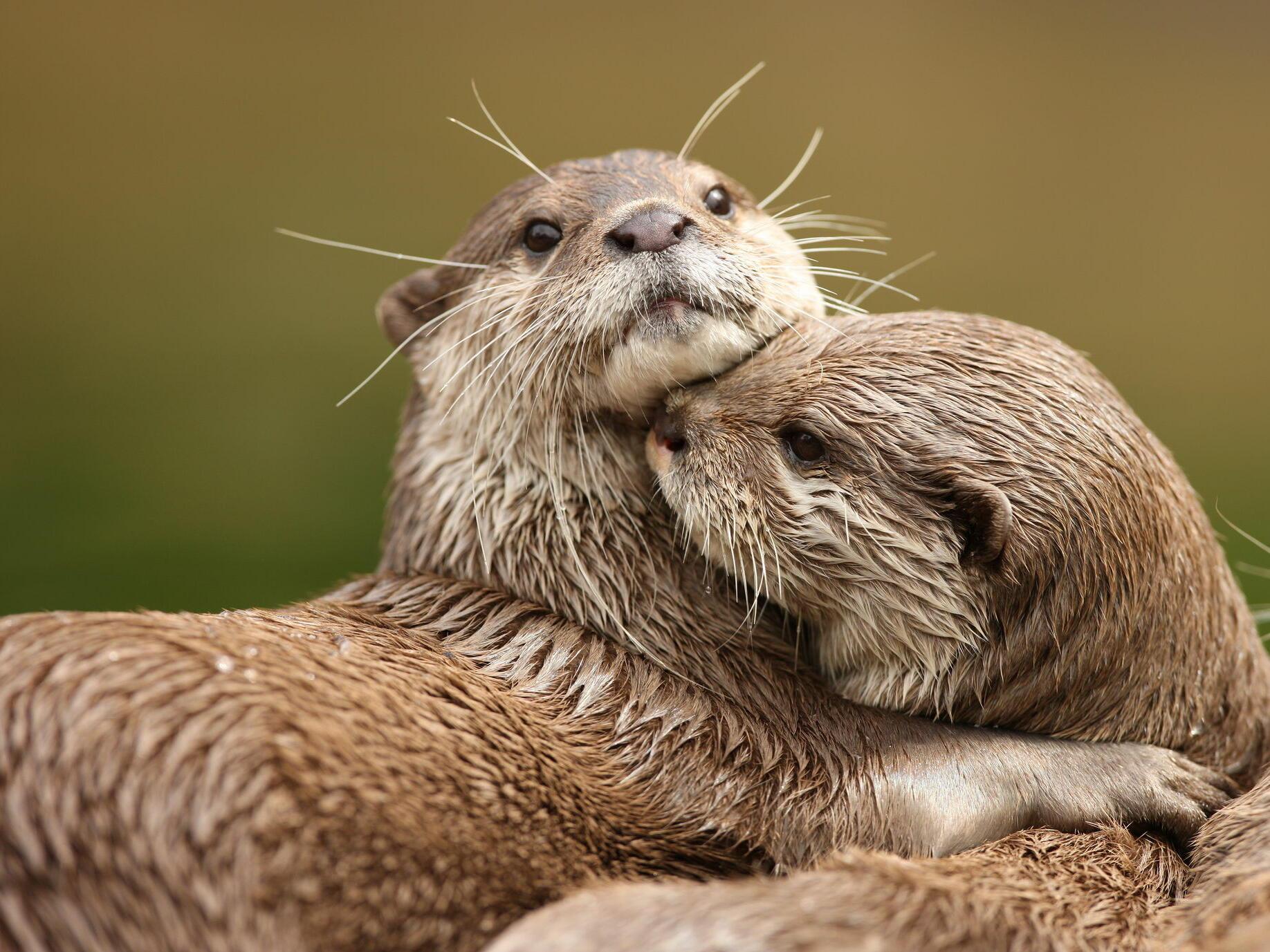 Portland Zoo sea otters