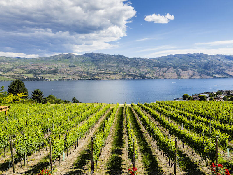 British Columbia wine region near Outback Lakeside Vacation