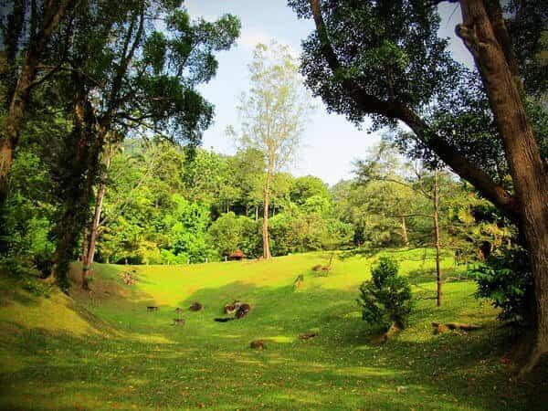 Places of Interest - Penang Botanical Garden