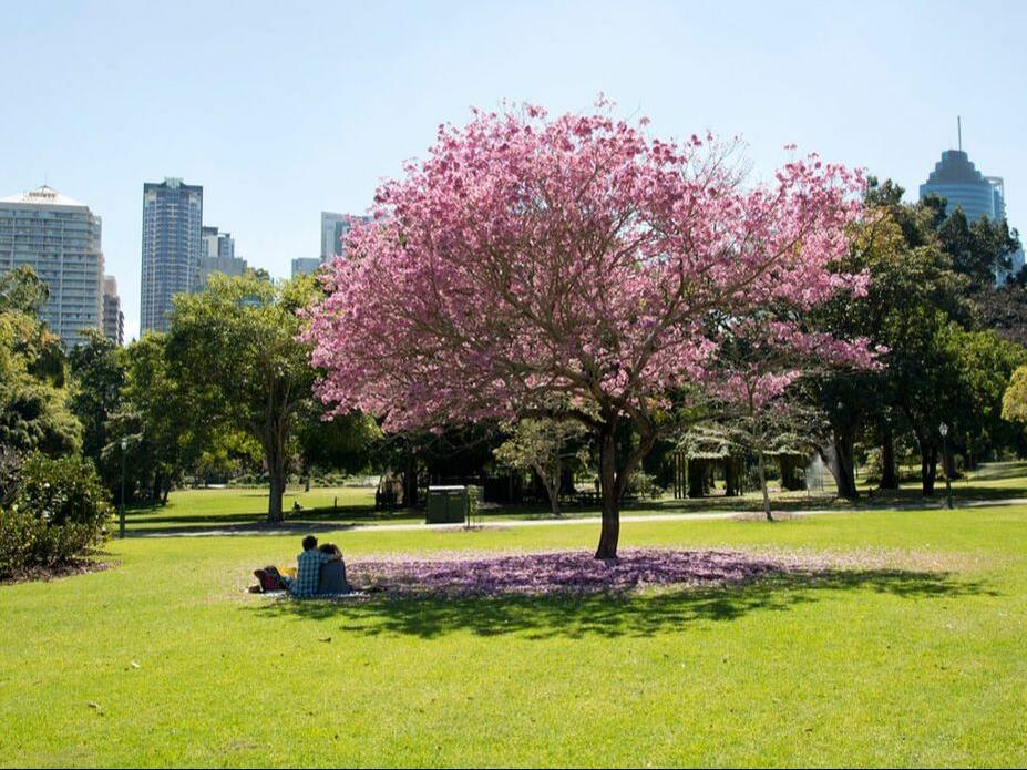 Flowering tree in Botanical garden near George Williams Hotel