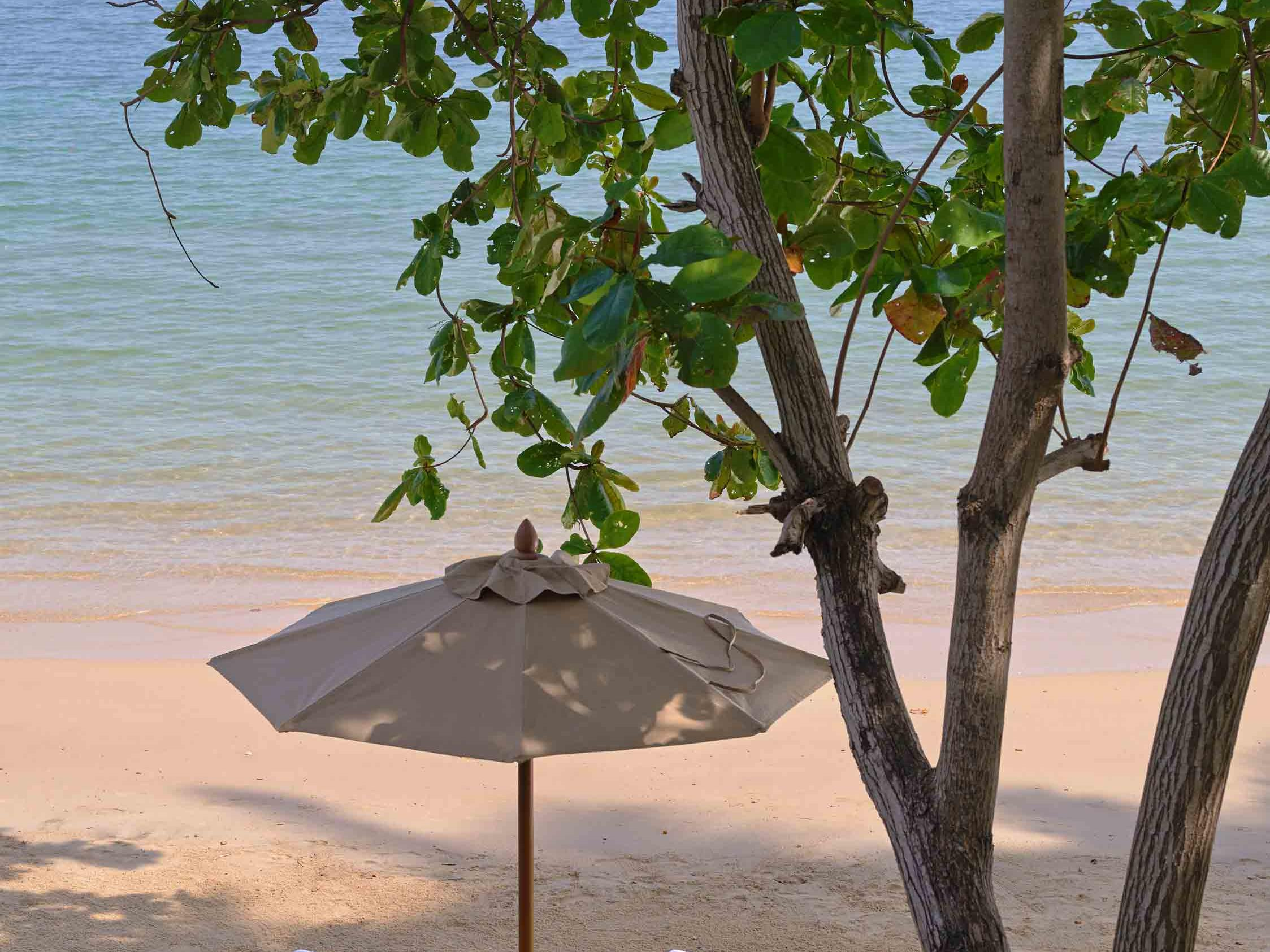 A portrait view of sunchairs, a tree and the ocean