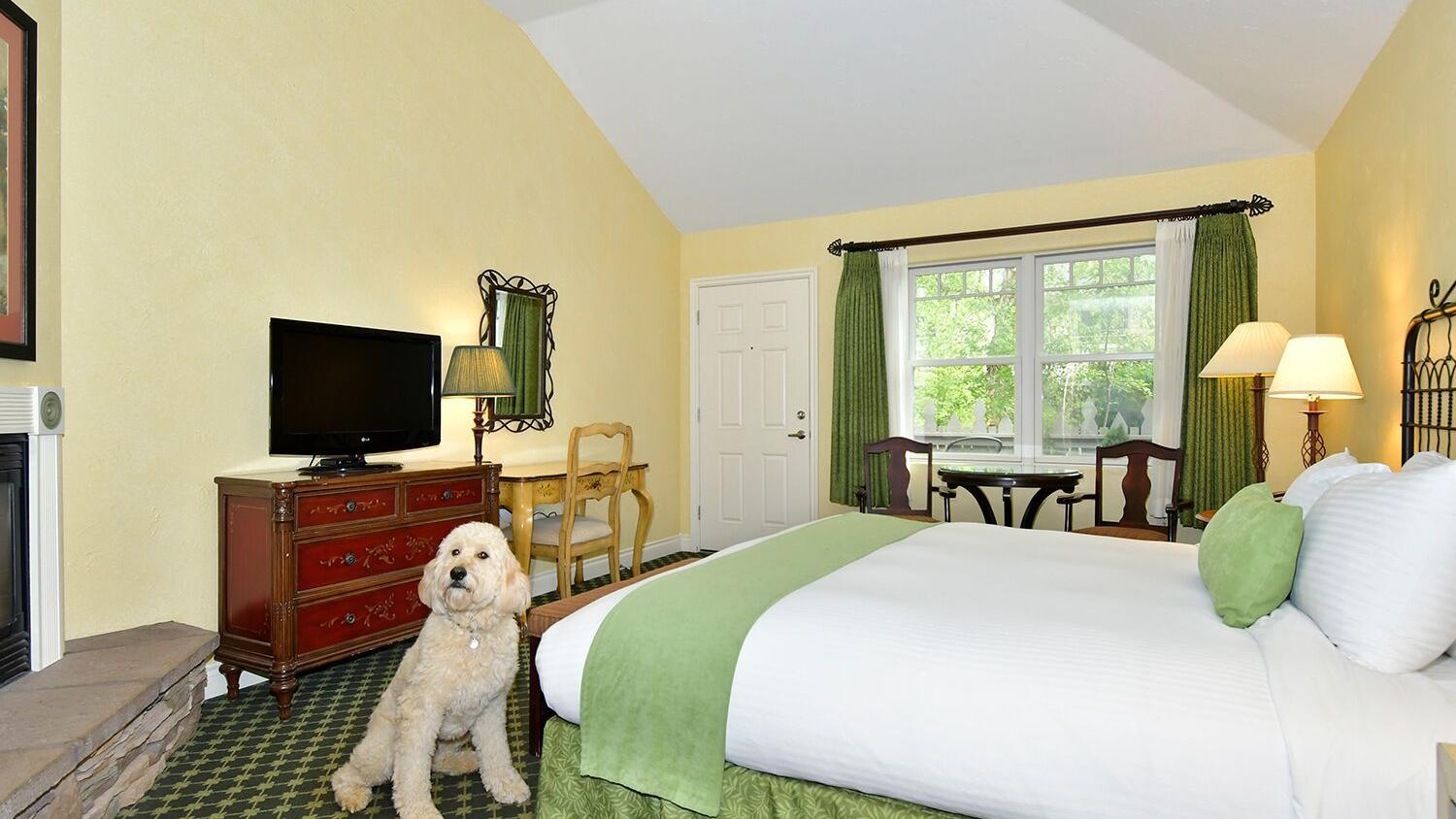 A dog sits in a pet-friendly hotel room