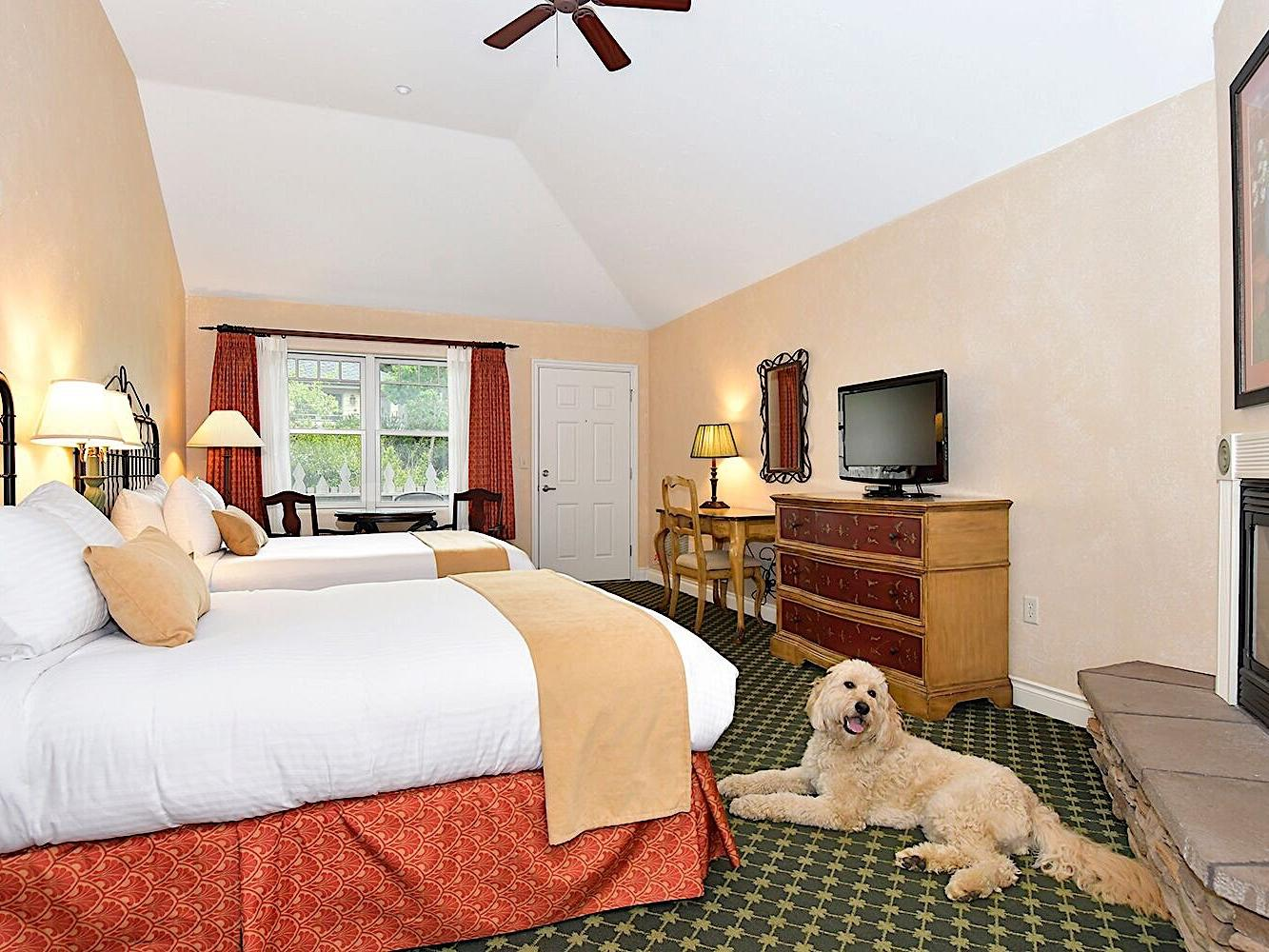 Double queen pet-friendly bedroom