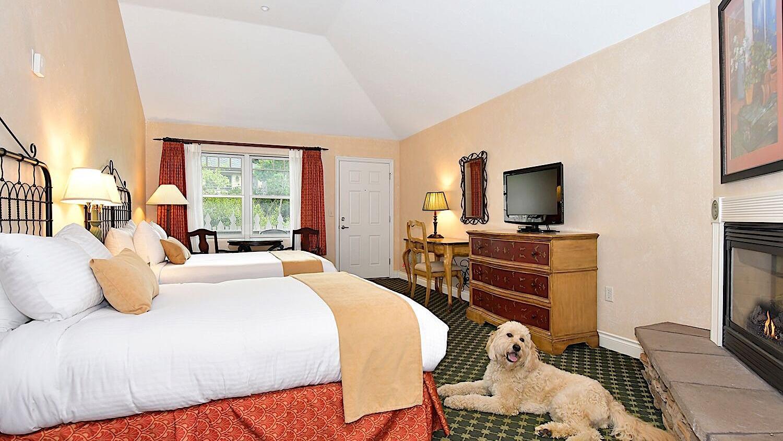 Double queen pet-friendly bedroom