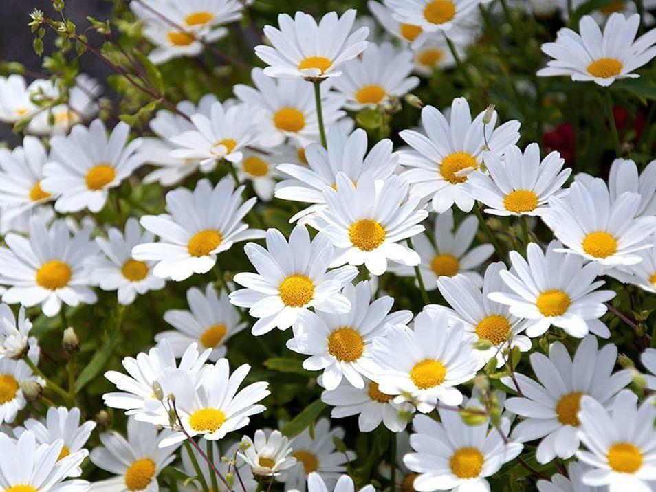 Beautiful white flowers in Apu treatment at Hotel Sumaq