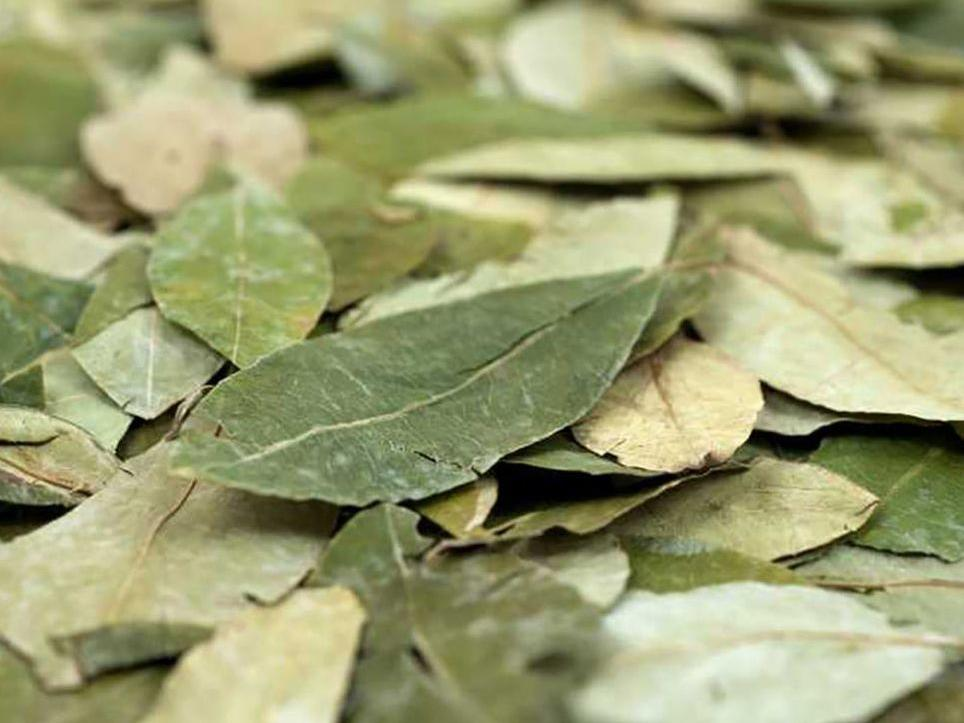 Dried coca leaves used in Body massage with coca in Hotel Sumaq