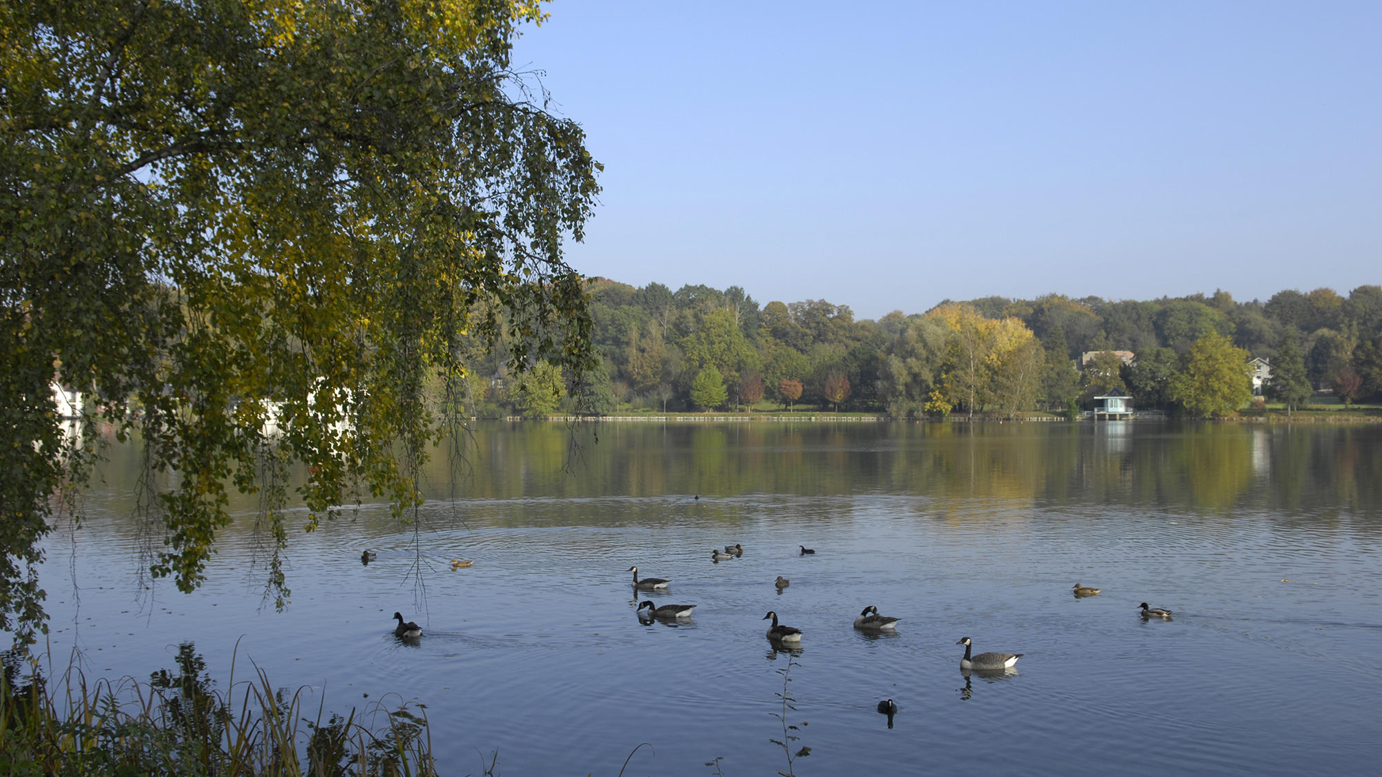 Genval lake with ducks